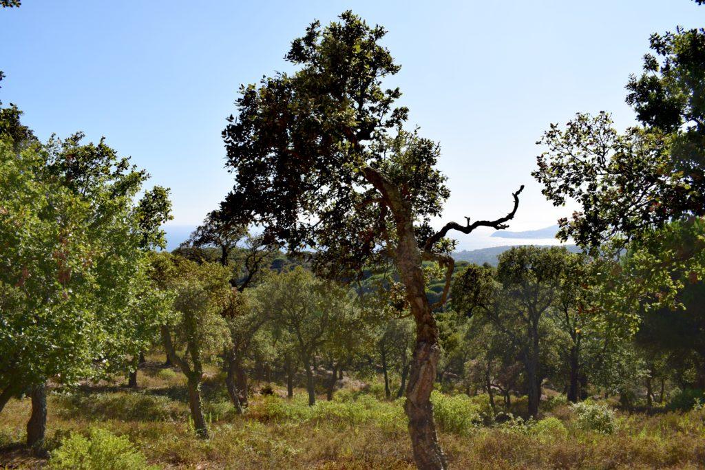Les forêts de chênes lièges