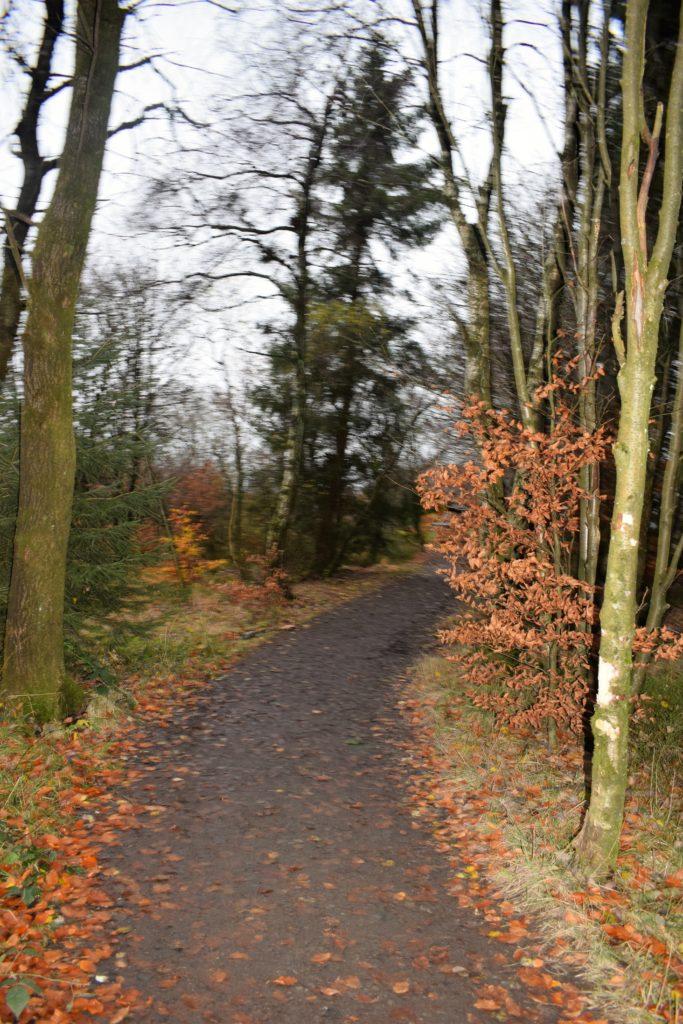 La réserve naturelle des Hautes Fagnes
