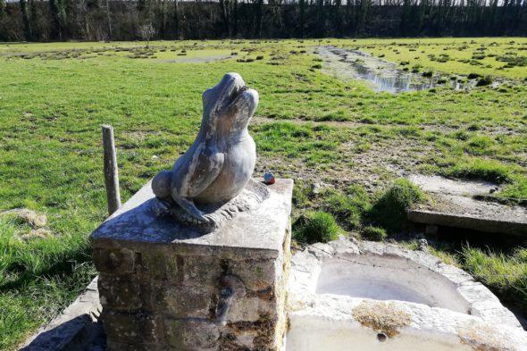 La fontaine de la rainette des marais