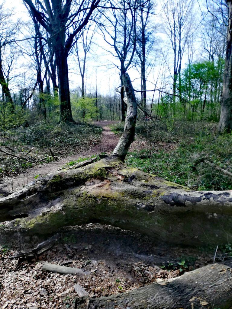 La Forêt du Bois brulé